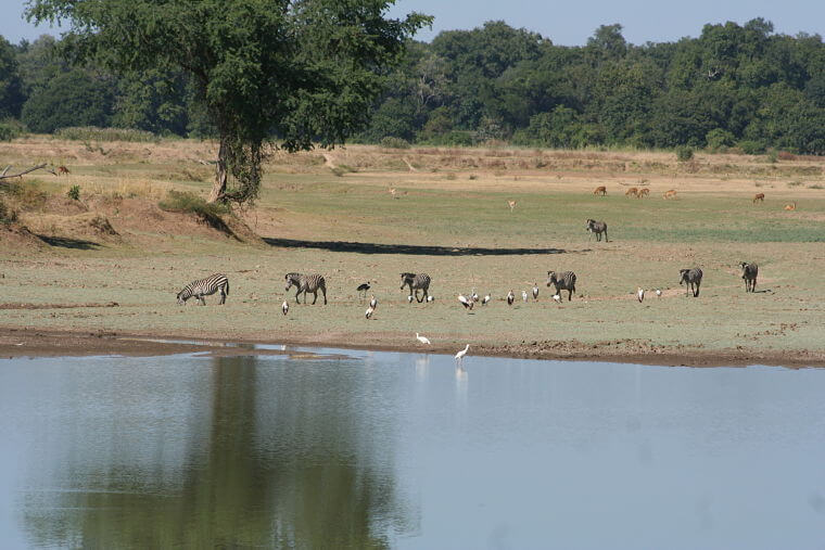 Ongerepte wildernis in South Luangwa National Park Zambia