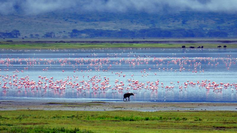 Hyena en flamingo's in Ngorongoro Crater Tanzania