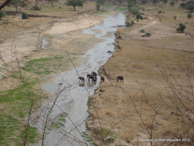 Uitzicht op Tarangire rivier in Tarangire National Park Tanzania