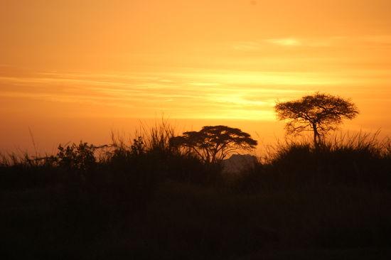 Sundowner in Tanzania