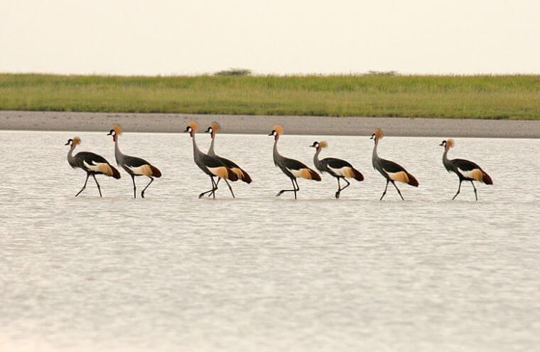 Makgadikgadi Salt Pans Nata Bird Sanctuary Botswana