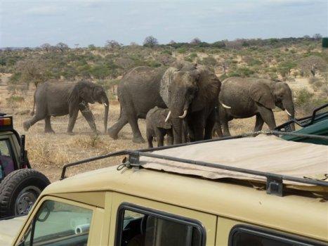 Familie Steendam-Buys omringd door olifanten in Tarangire National Park Tanzania