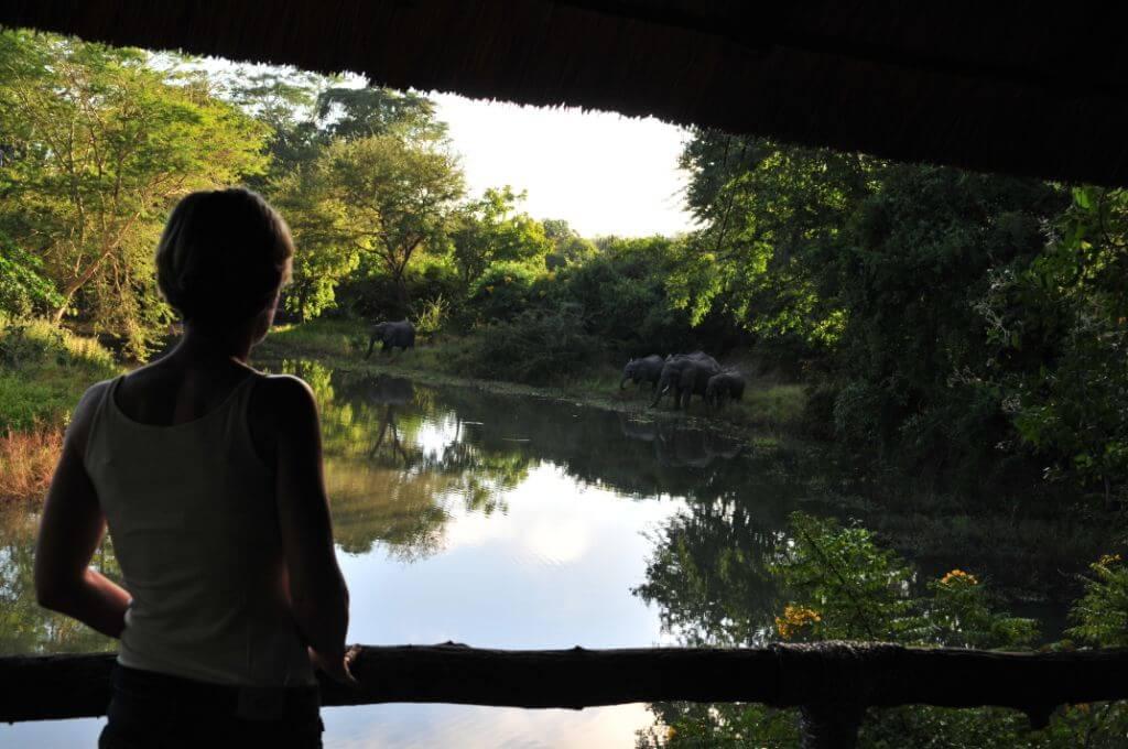 Olifanten bij de veranda in South Luangwa National Park Zambia