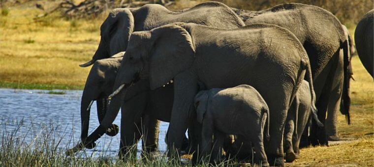 Olifanten bij Bomani Tented Camp Hwange National Park Zimbabwe