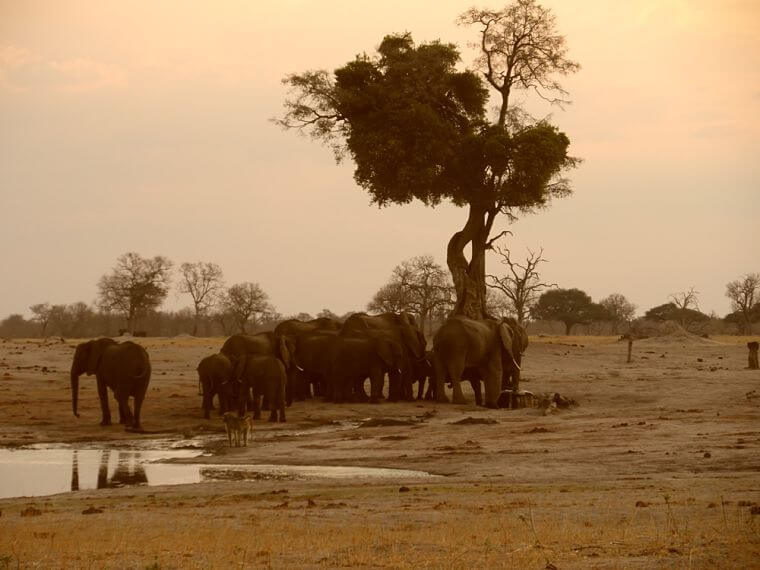 Olifanten bij waterhole in Hwange National Park Zimbabwe