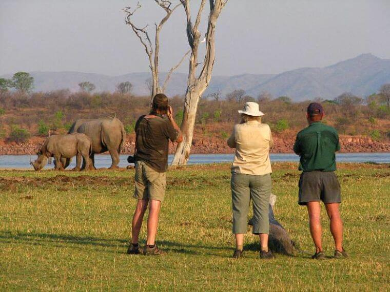 Rhino walk in Matusadona National Park Zimbabwe