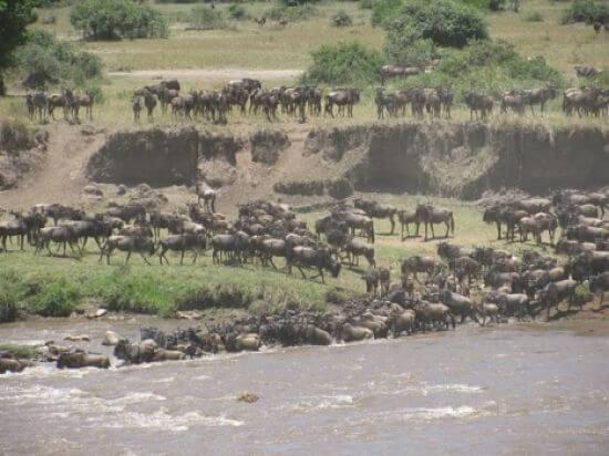 Rivieroversteek grote migratie in de Lamai Wedge van Serengeti National Park Tanzania