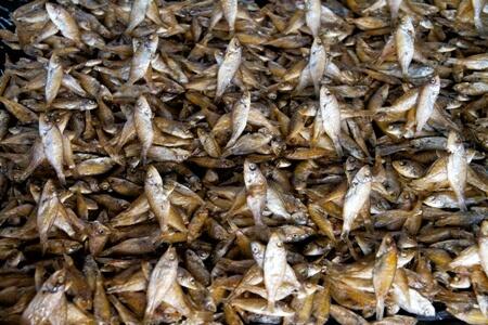 Vissen uit Lake Malawi