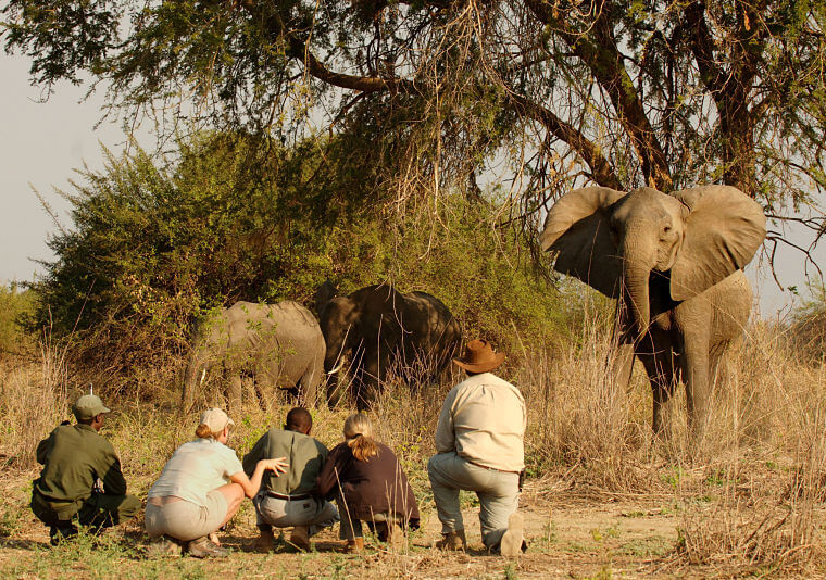 Wandel safari South Luangwa National Park Zambia