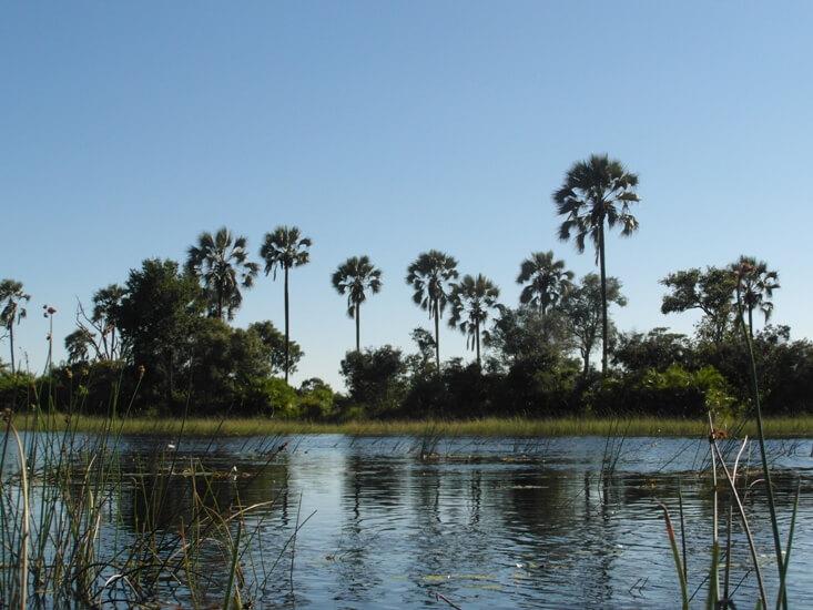 Okavango Delta bij Pom Pom Camp in Botswana