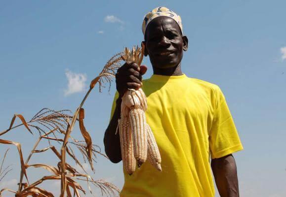 Zimbabwanen verbouwen voedsel in de stad illegaal (@MO.be)