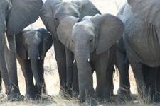Alle Keniaanse natuurparken krijgen drones