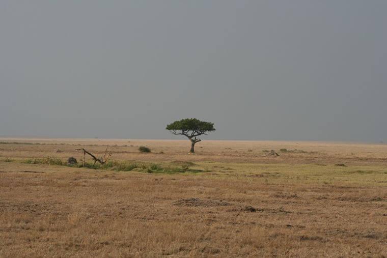 Uitgestrekte vlaktes van Serengeti National Park Tanzania