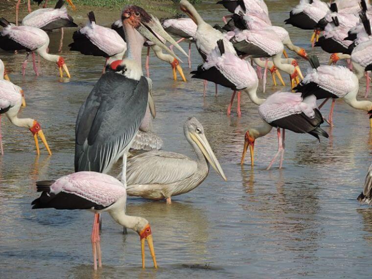 Vele soorten vogels in Selous Game Reserve Tanzania