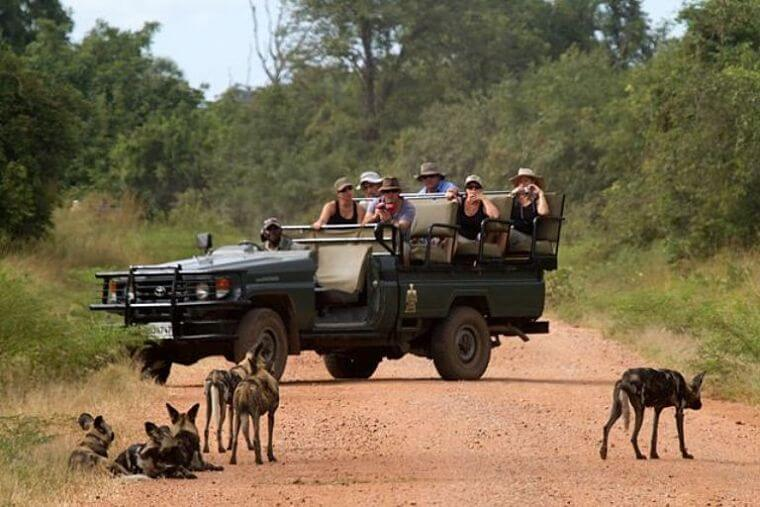 Game drive South Luangwa National Park Zambia