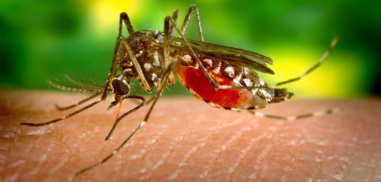 Malaria mug (@Gezin op Reis)