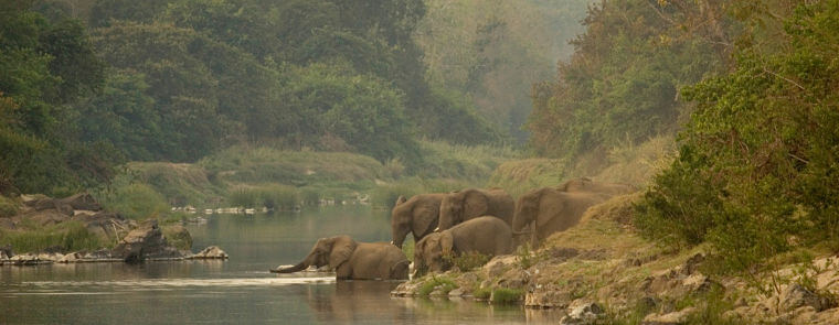 Olifanten in Bua rivier Nkhotakota Wildlife Reserve Malawi