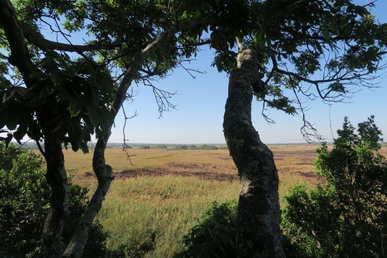 Uitzicht vanaf de Fibwe hide in Kasanka National Park Zambia