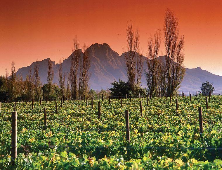 Wijngaarden langs de Garden Route Zuid-Afrika