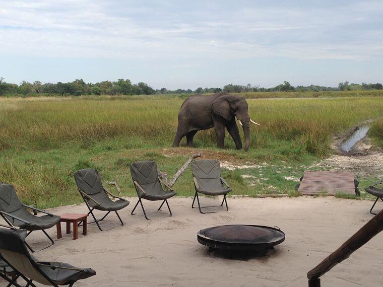 Olifant bij Kanana Camp Okavango Delta Botswana