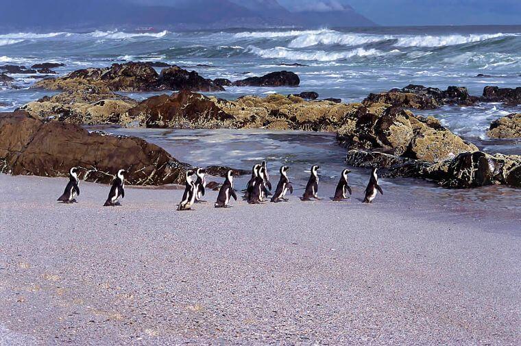 Boulders Beach pinguïns Zuid-Afrika