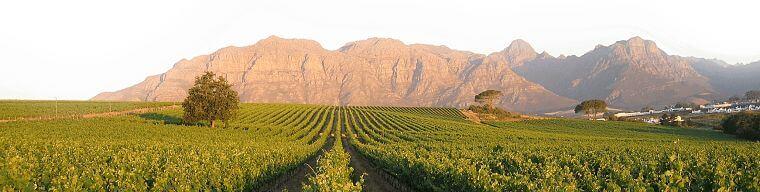 Kleine Salze Wine Estate Stellenbosch