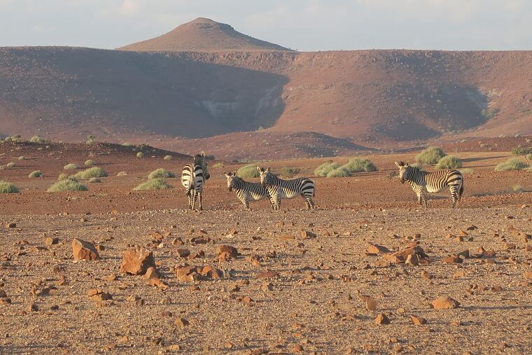 Palmwag concessie Namibië