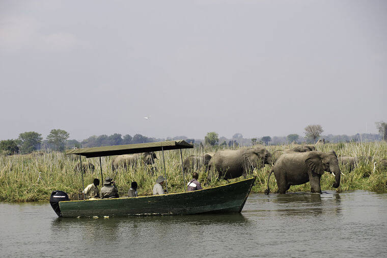 Boot safari op Shire rivier in Liwonde National Park Malawi
