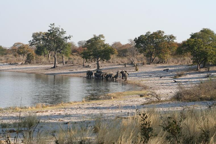 Mahango Game Reserve Namibië