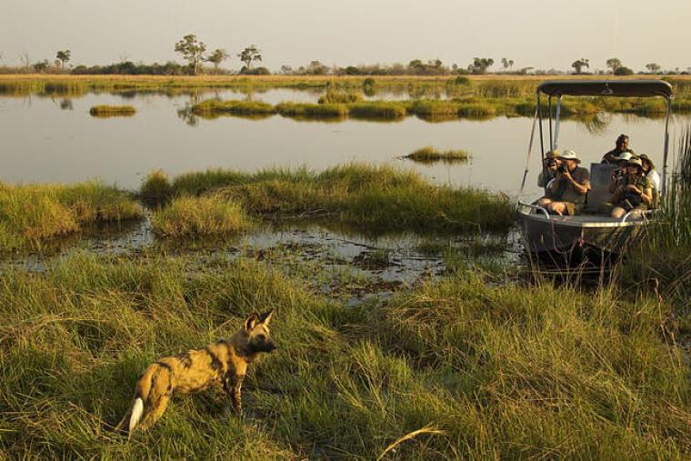 Linyanti Wildlife Reserve Botswana