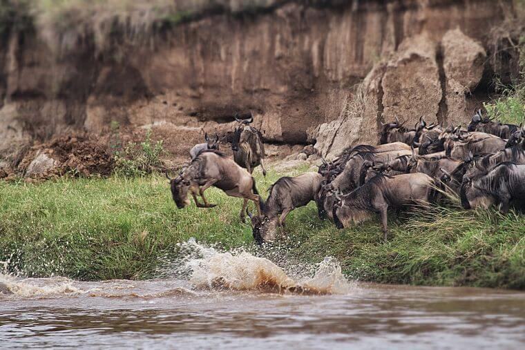 Grote Migratie Serengeti National Park Tanzania