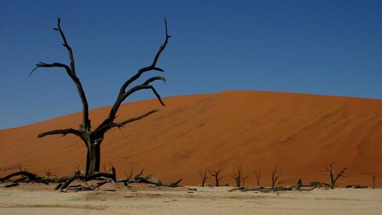 Dead Vlei bij Sossusvlei Namibië