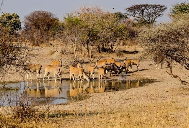 Waterhole in Mangetti National Park Namibië