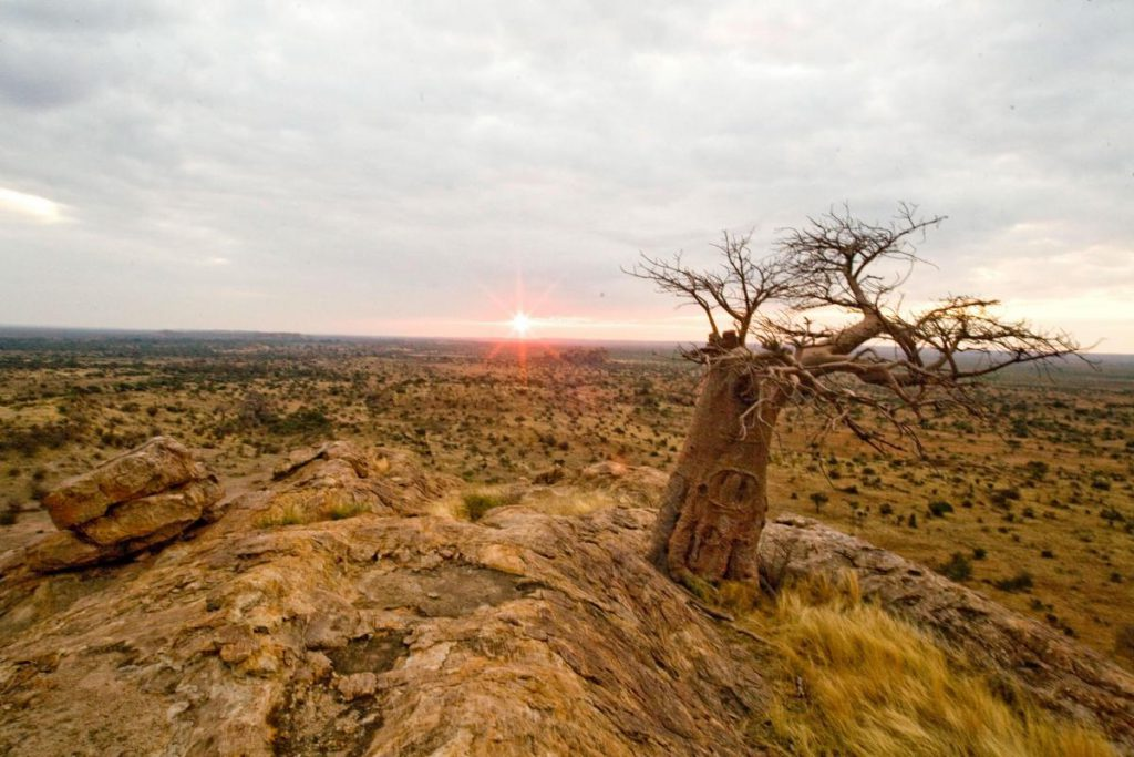 Mapungubwe Hill Northern Tuli Game Reserve Botswana