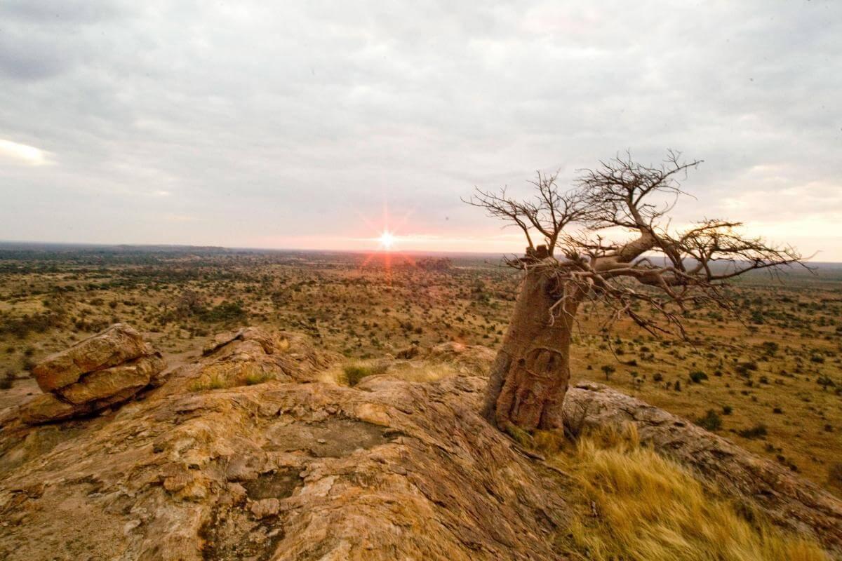 Mapungubwe Hill Northern Tuli Game Reserve Botswana
