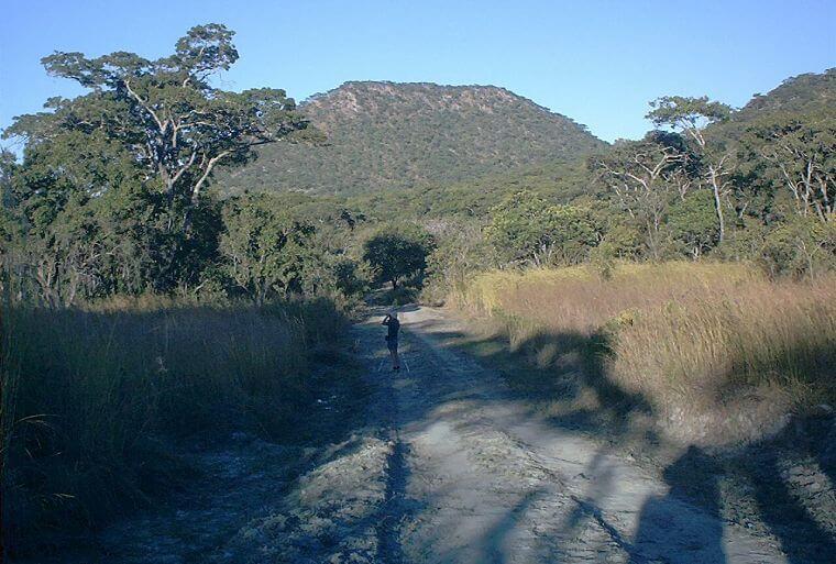 Dzalanyama Forest Reserve bird watching Malawi