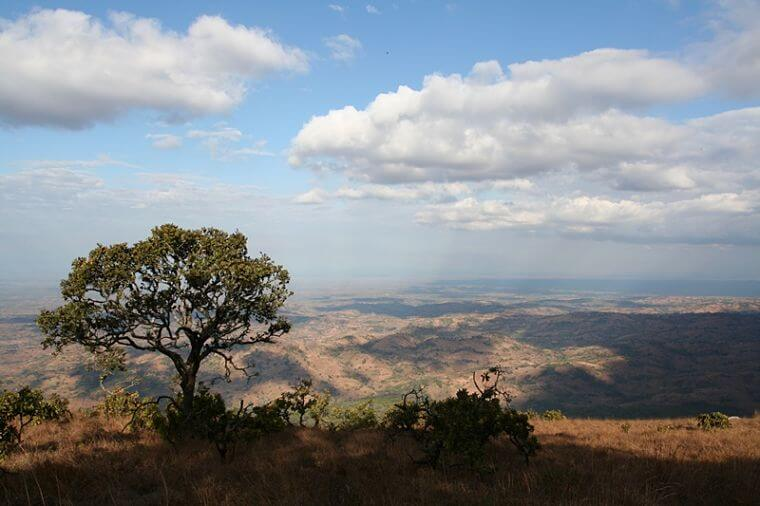 Uitzicht Ntchisi Forest Reserve in Malawi
