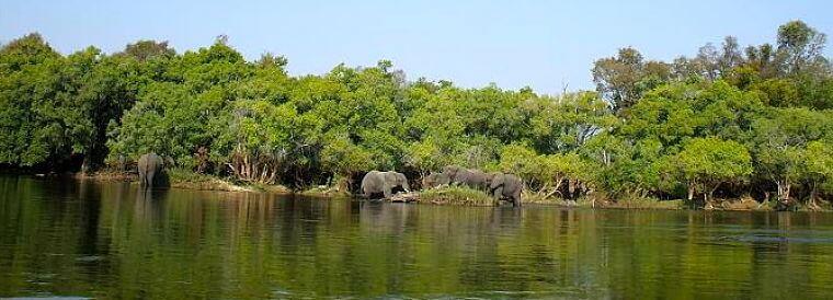 Kafue rivier olifanten op oever, Zambia