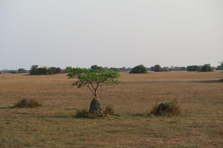 Lake Bangweulu vegetatie, Zambia