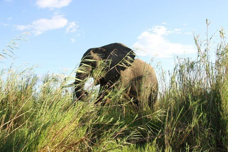 Olifant op oever Lake Kariba Zambia
