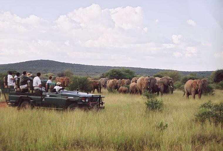 Game drive bij Makanyane Safari Lodge