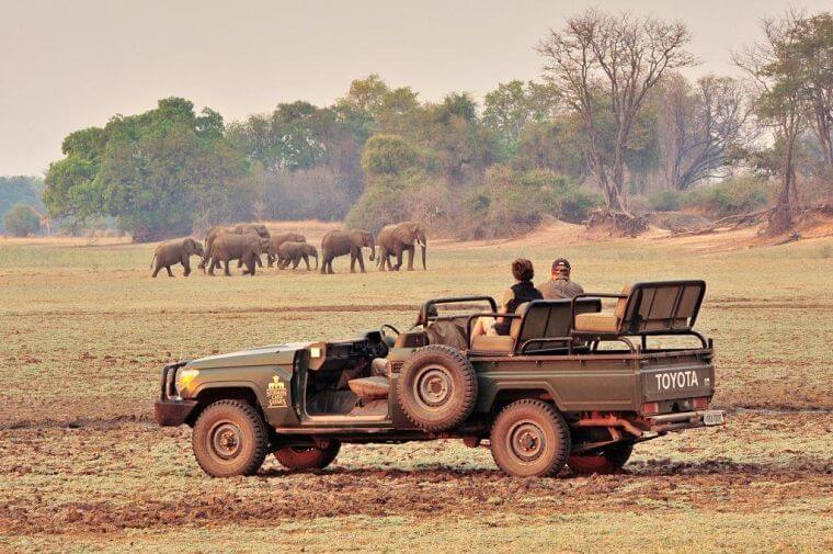 Game drive in South Luangwa National Park bij Chinzombo Zambia