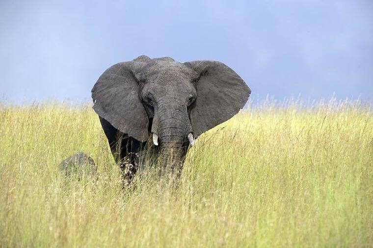 Olifanten bij Lamai Serengeti National Park Tanzania