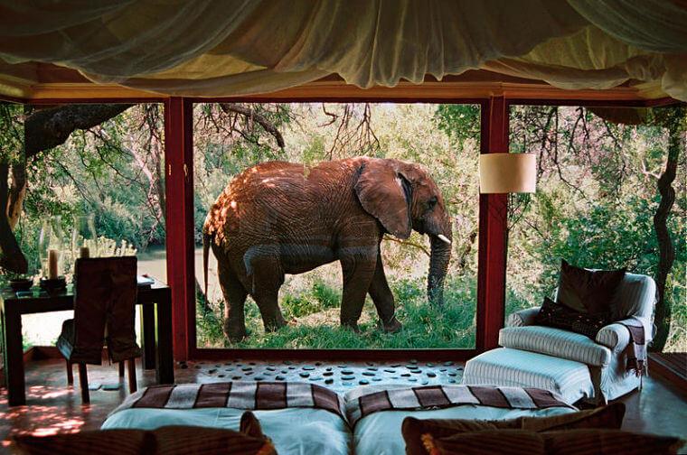 Makanyane Safari Lodge olifant voor slaapkamer