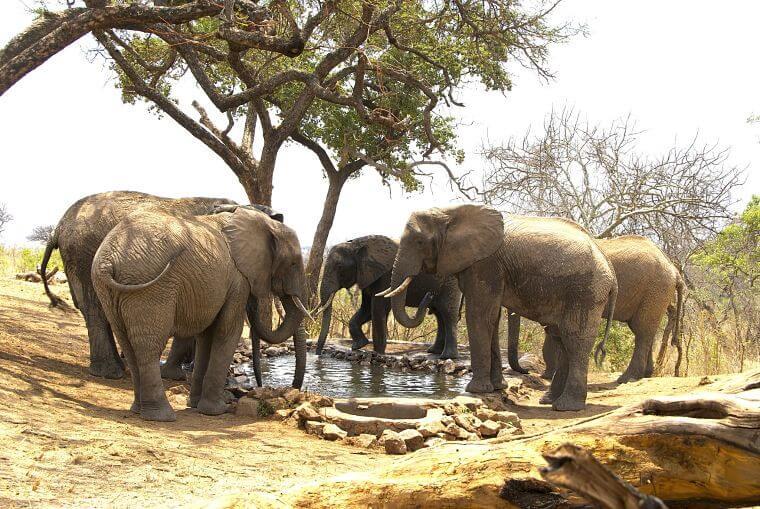 Tarangire Treetops drinkende olifanten bij waterhole van de lodge