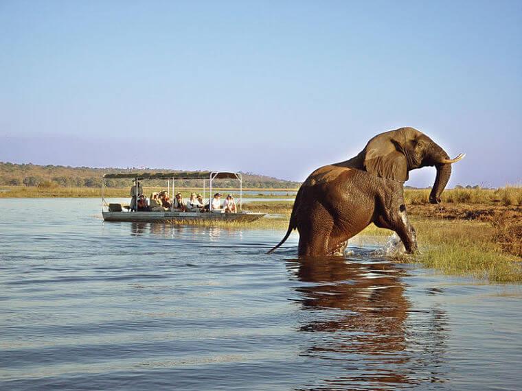 Tongabezi Zambia dagtrip naar Chobe National Park