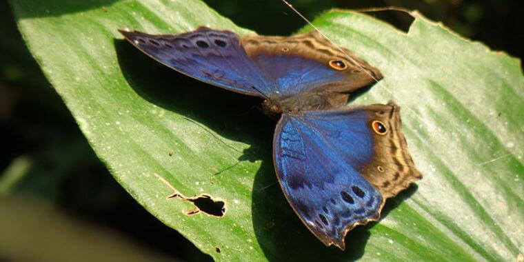 Bwindi Impenetrable National Park 200 vlindersoorten
