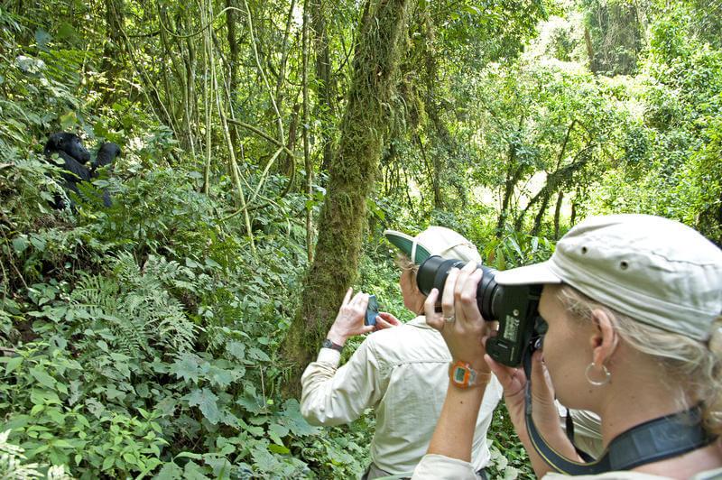 Bwindi Impenetrable National Park gorilla trekking (@ Sanctuary Gorilla Forest Camp)