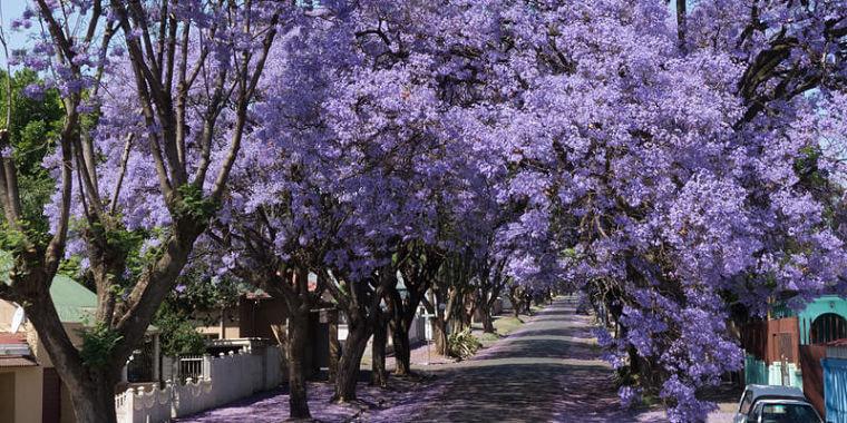 Johannesburg Zuid-Afrika