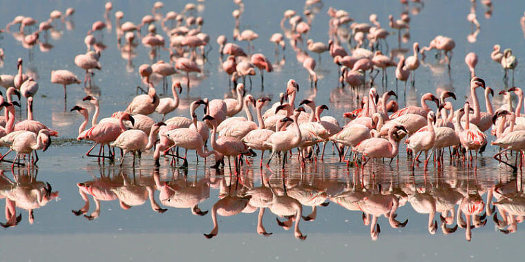 Mahale Mountains National Park flamingo's in Lake Tanganyika